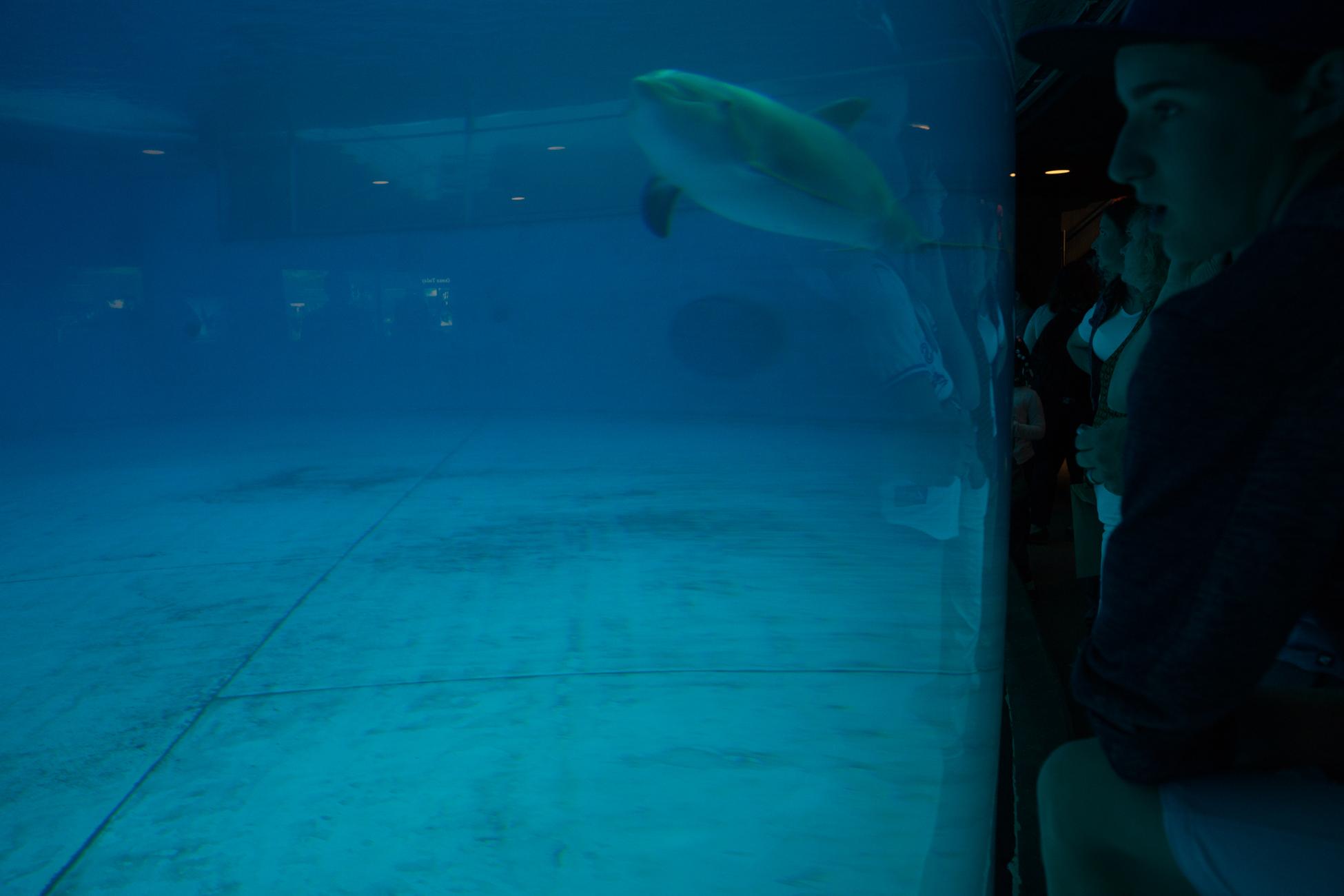 Baltimore Inner Harbor and National Aquarium (c) My3GirlsPhotography May 2017-4.jpg