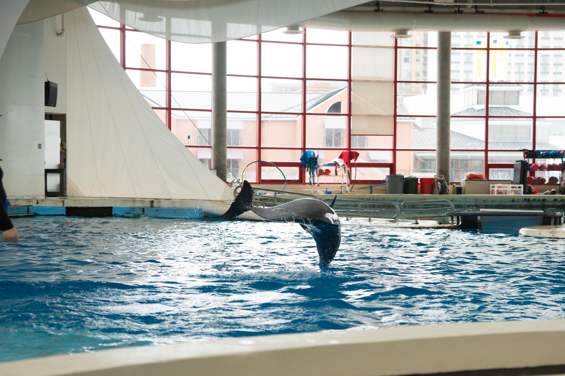 Baltimore Inner Harbor and National Aquarium (c) My3GirlsPhotography May 2017-14.jpg