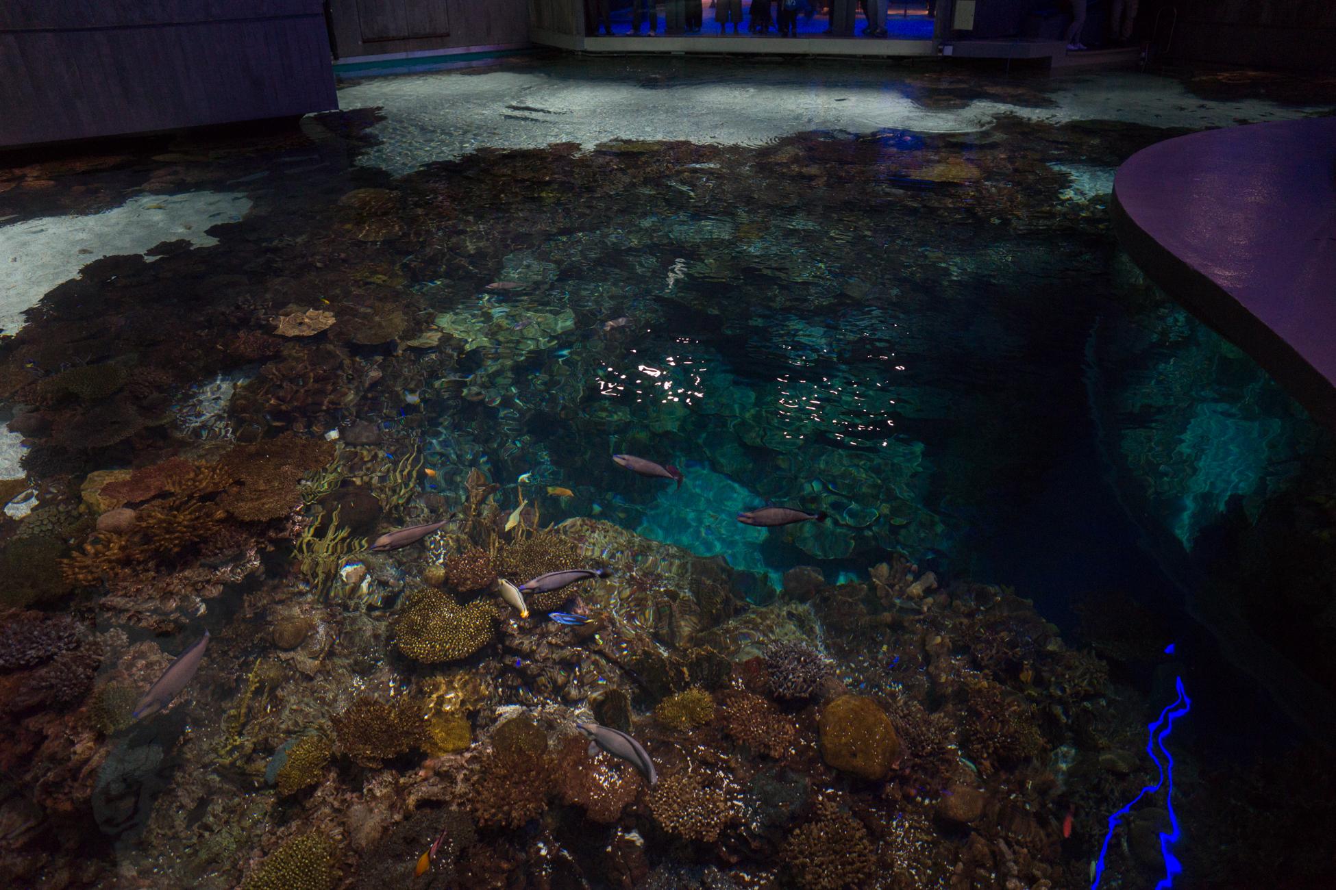 Baltimore Inner Harbor and National Aquarium (c) My3GirlsPhotography May 2017-18.jpg