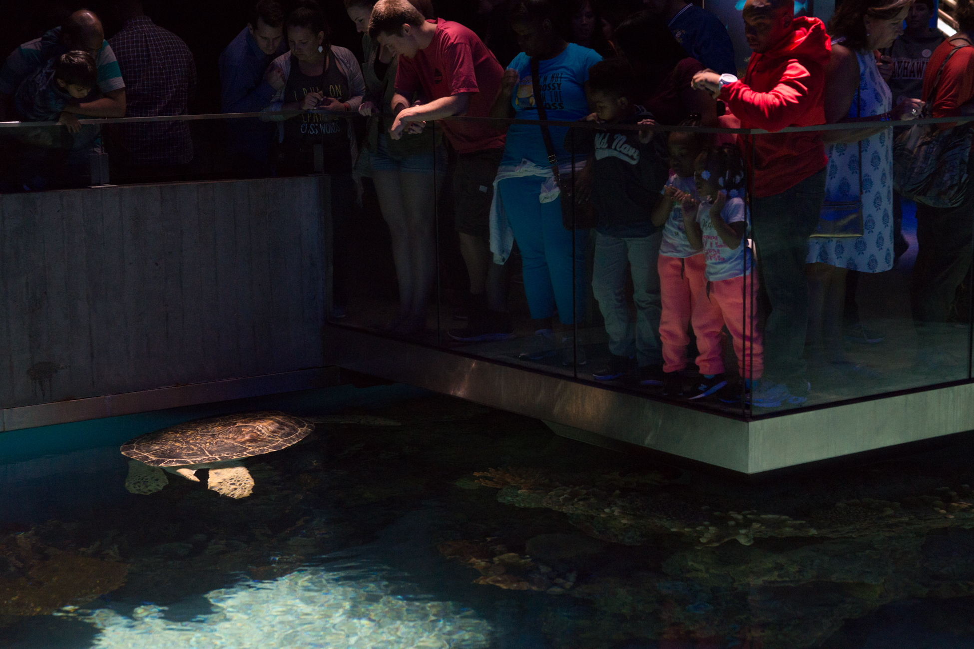 Baltimore Inner Harbor and National Aquarium (c) My3GirlsPhotography May 2017-19.jpg