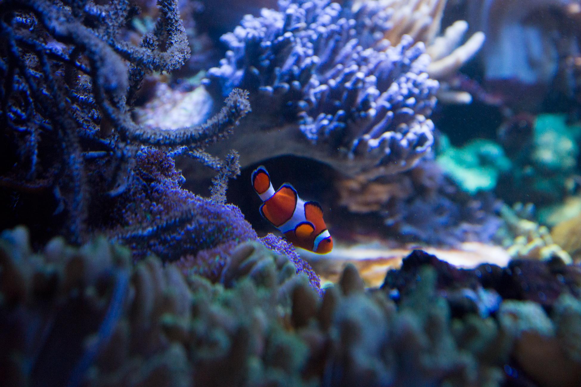 Baltimore Inner Harbor and National Aquarium (c) My3GirlsPhotography May 2017-25.jpg