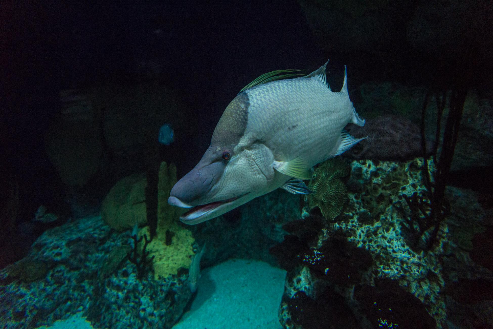 Baltimore Inner Harbor and National Aquarium (c) My3GirlsPhotography May 2017-33.jpg