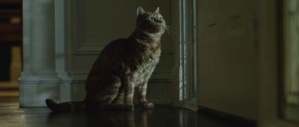 gone-girl-movie-screenshot-cat
