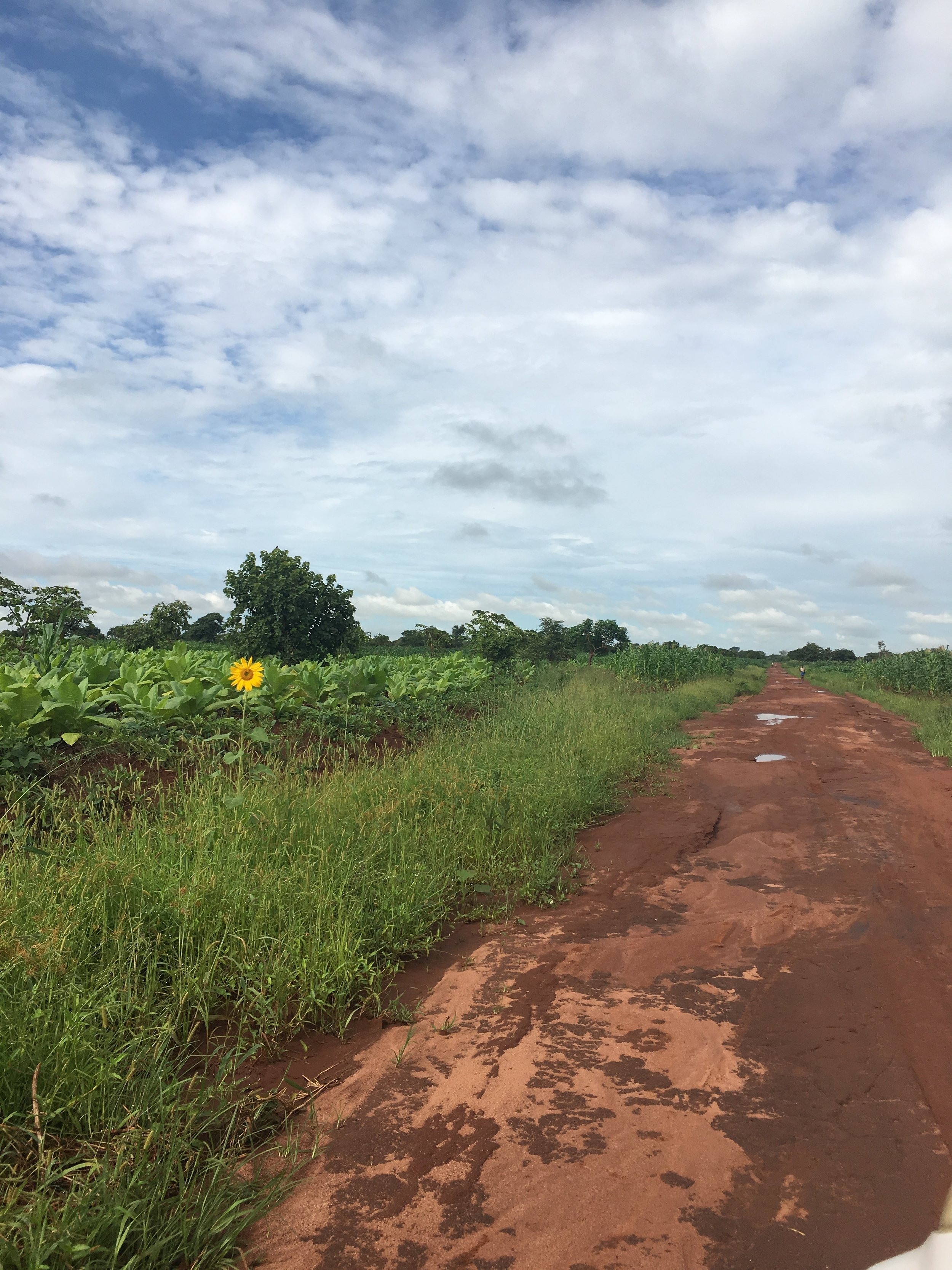 The road to Nambuma Health Center