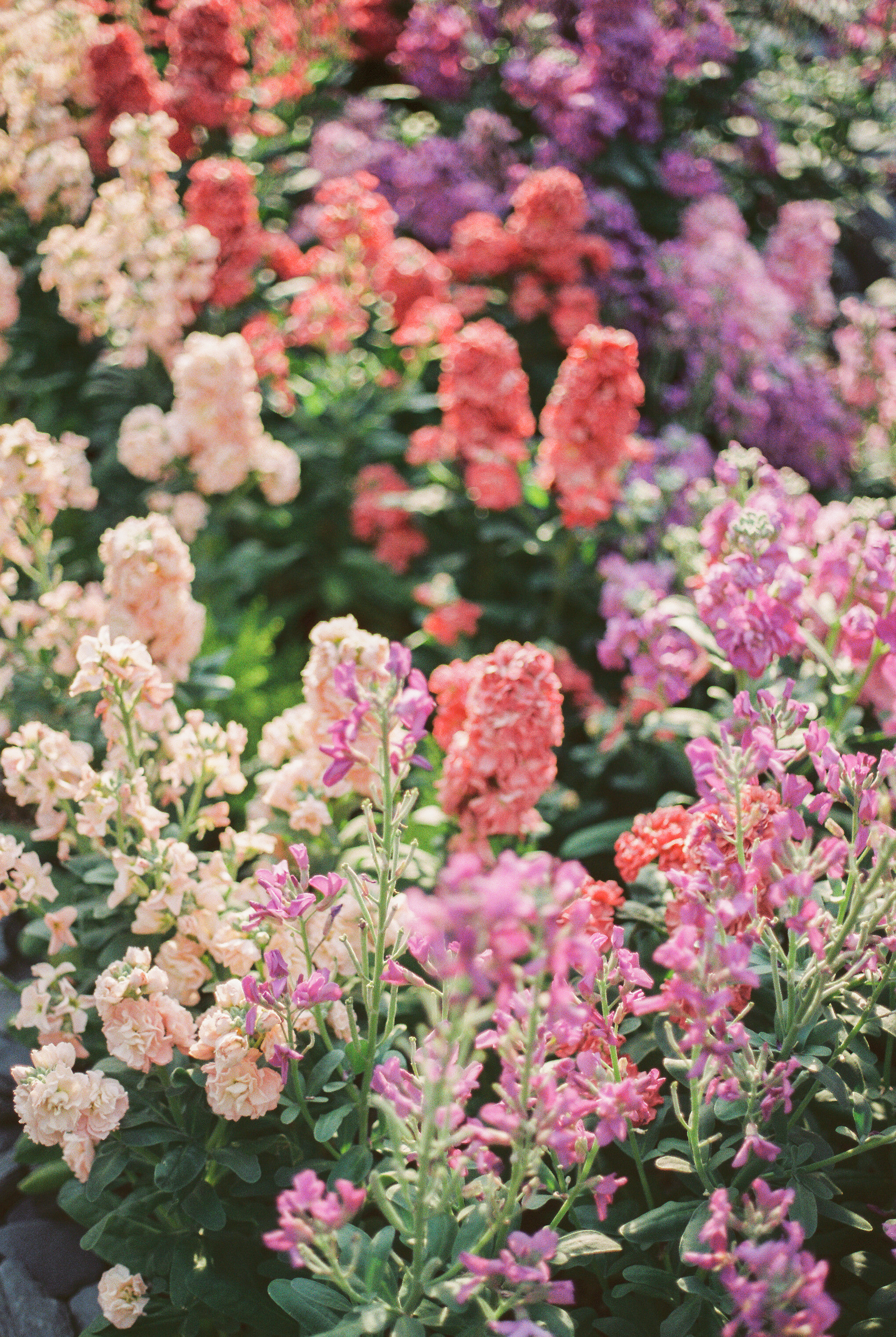 flowers (1 of 1).jpg