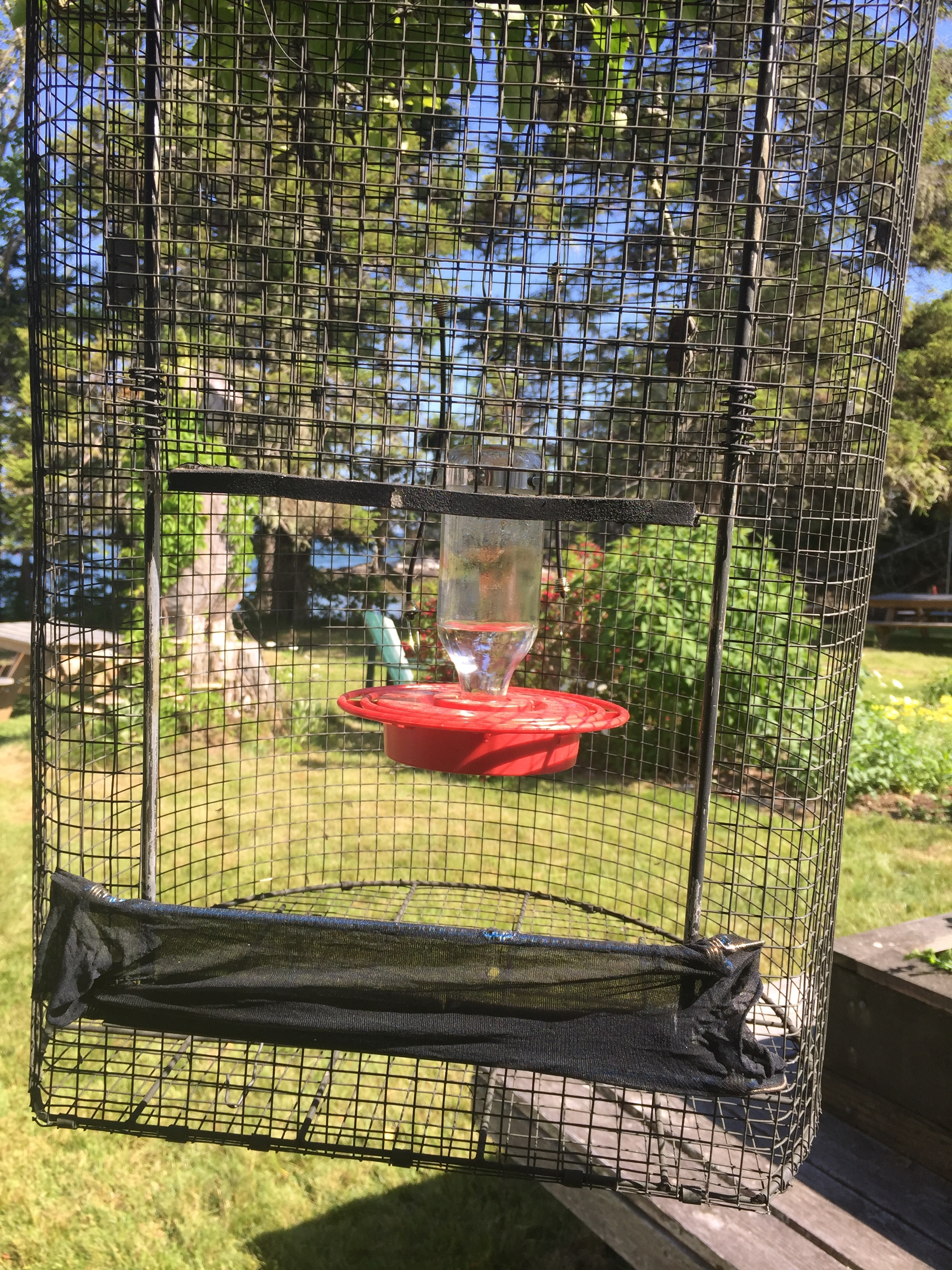 Gary's specially-made trap to capture hummingbirds safely