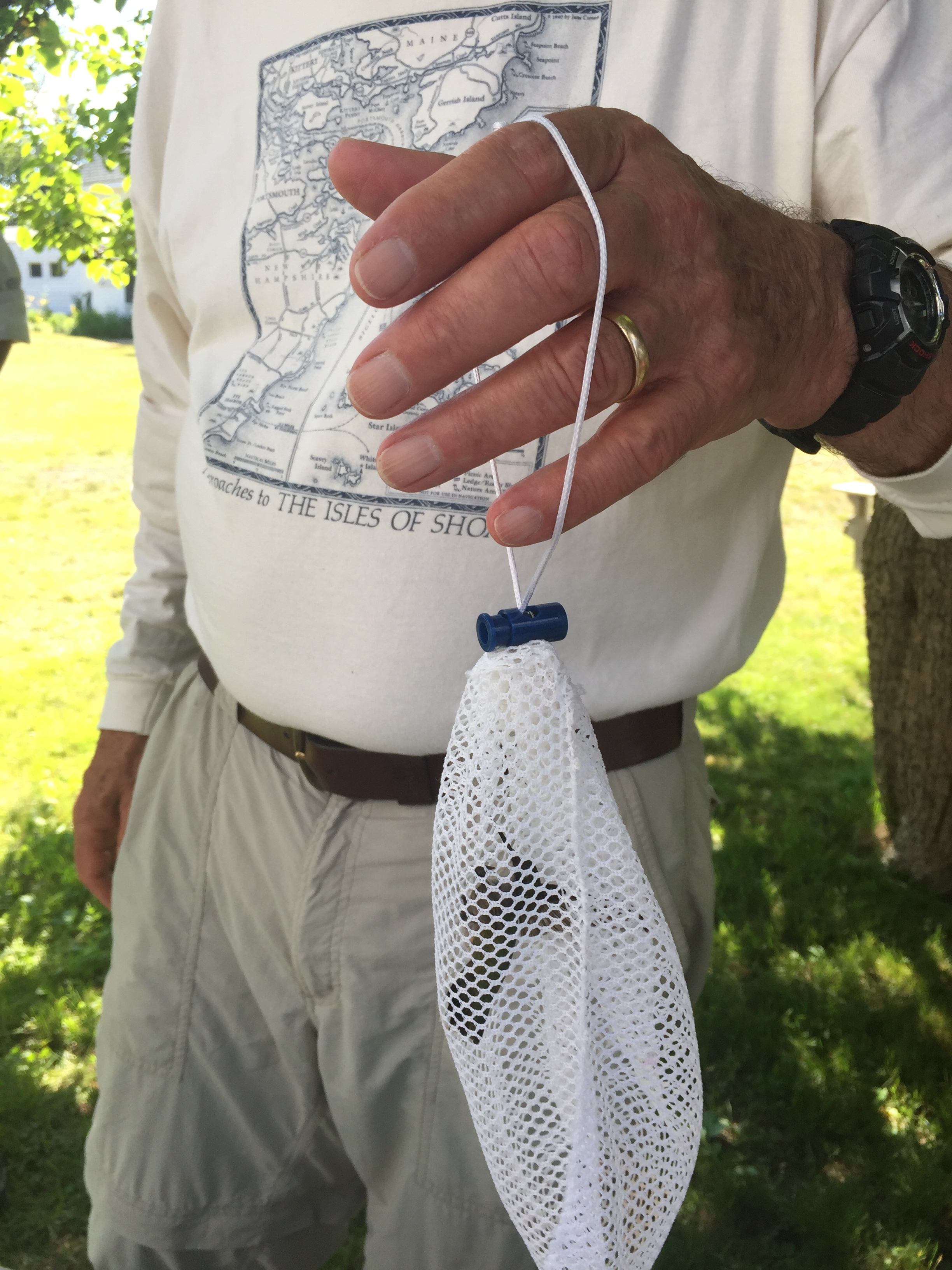 A Ruby-throated hummingbird is transported from trap to the banding station in a soft mesh bag
