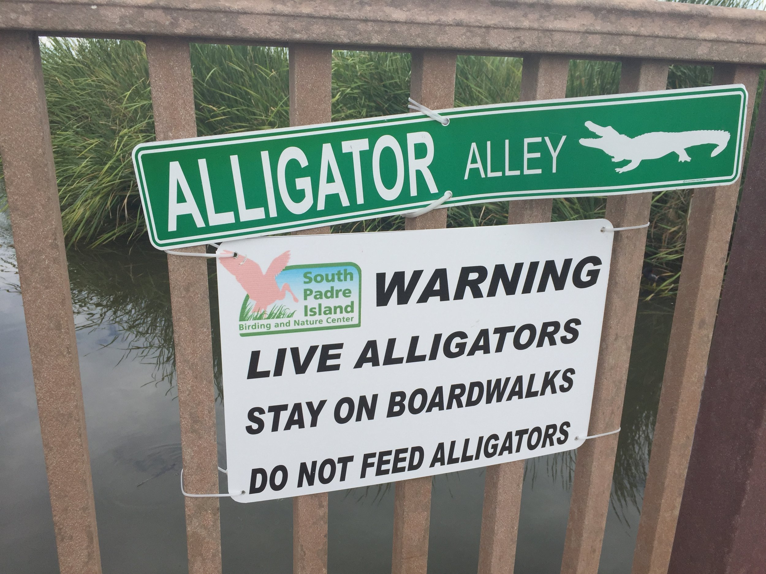 Pretty clear signage. I want to see an alligator!
