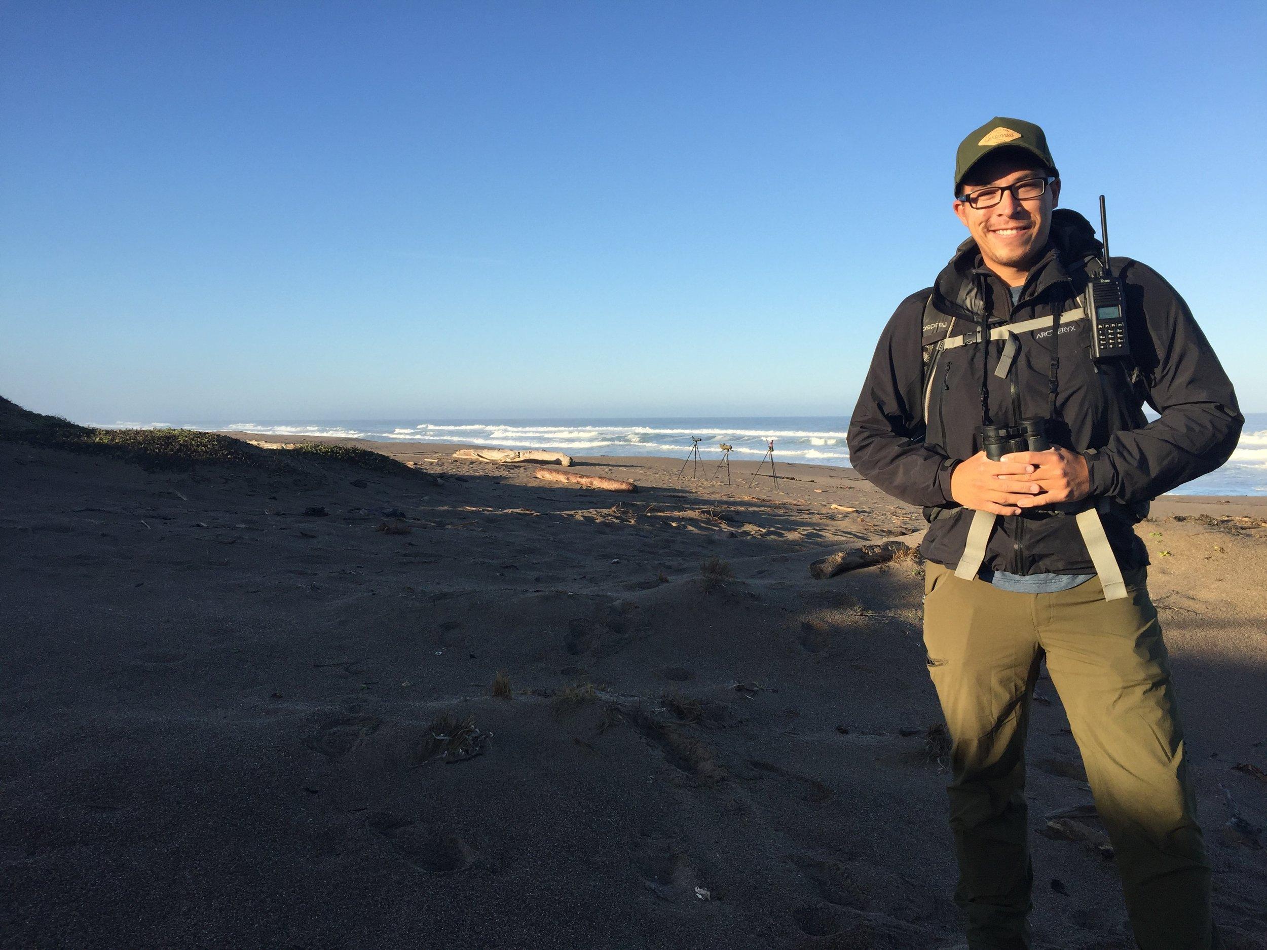 Matt Lau found the Lesser sand-plover while conducting Snowy Plover surveys along the beach in California.