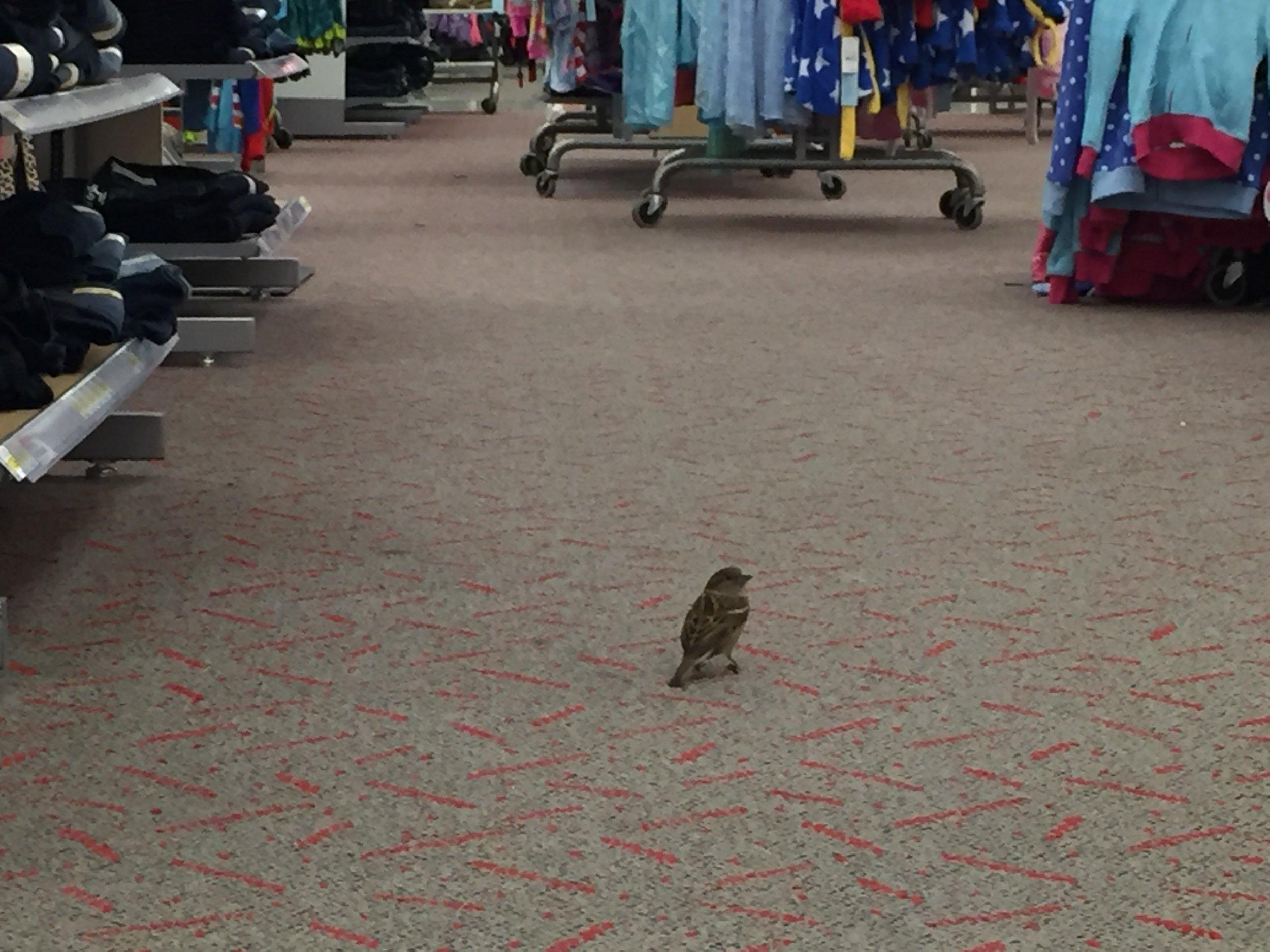 Even when I'm not birding... I'm birding! Check out my Target eBird  checklist