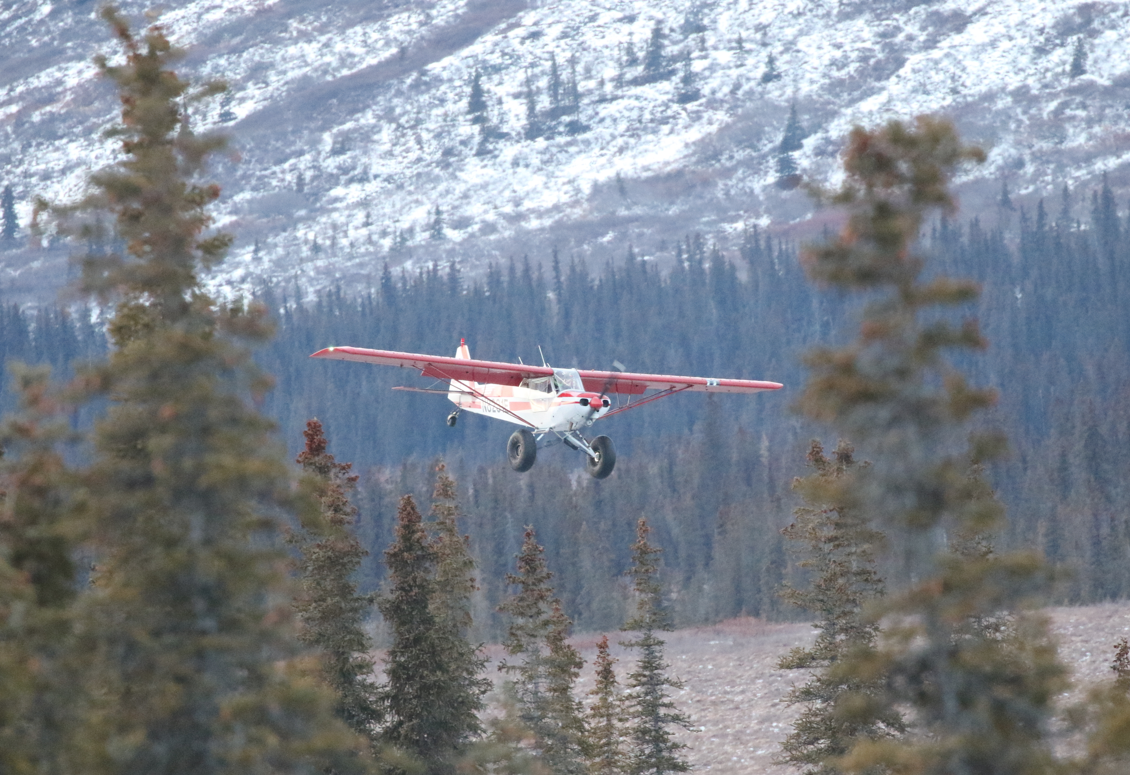 The cub comes in just over the trees, dropping in to expertly skid to a stop on the lake.