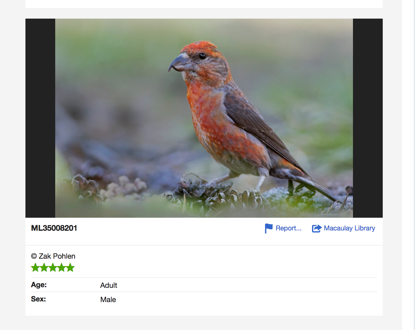 Zak Pohlen's stunning photo of the Cassia crossbill from Idaho. Check out his eBird list to hear the great recordings he made documenting this species! http://ebird.org/ebird/view/checklist/S30033778