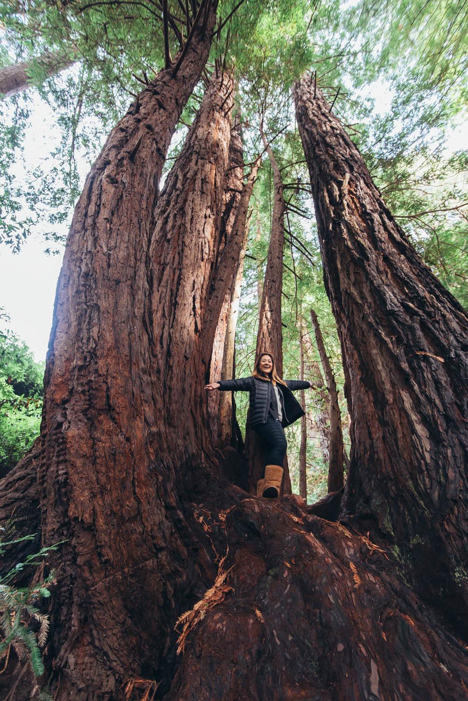 Ewoldsen Trail in Big Sur