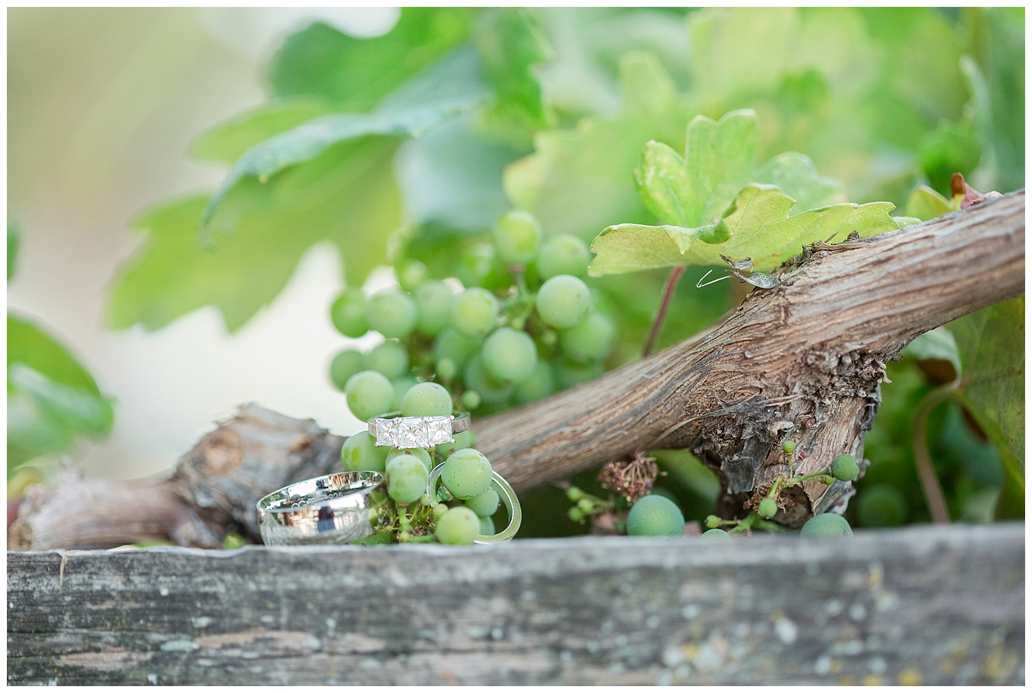 Jill+Bret | Paso Robles winery elopement | Renoda Campbell Photography_02.jpg