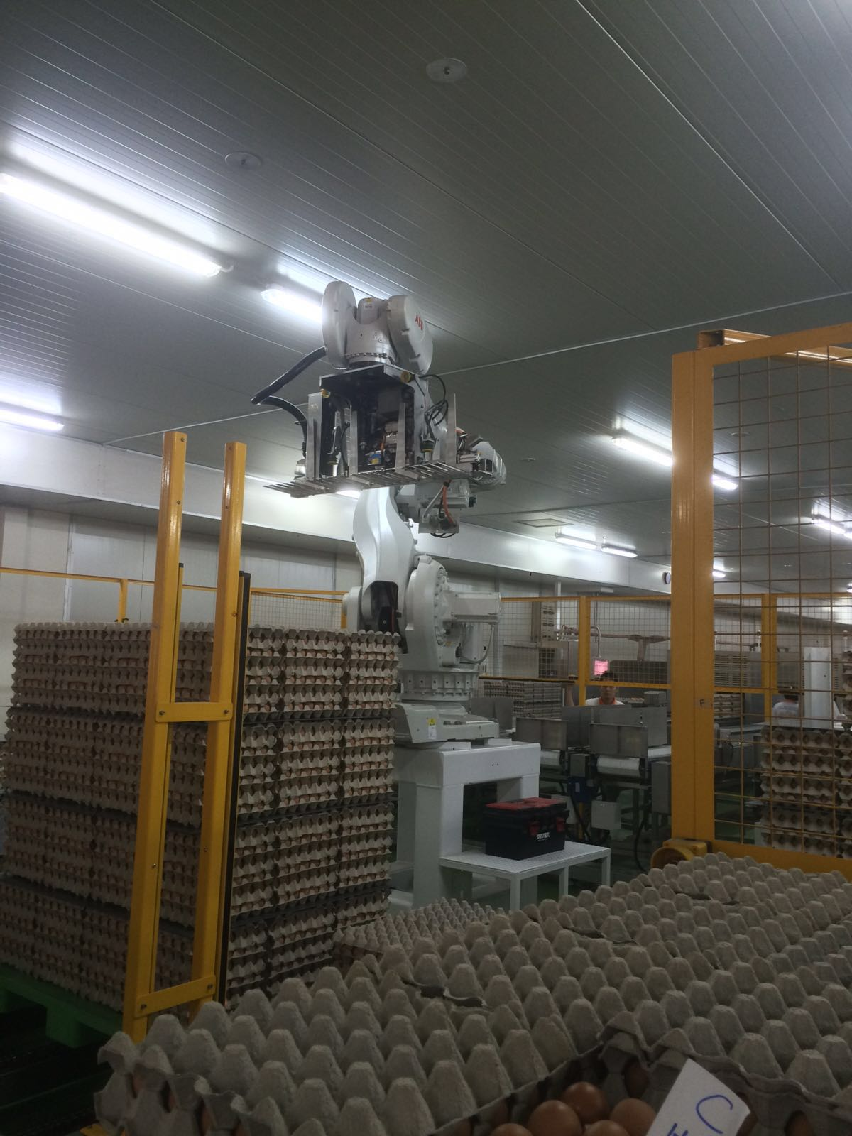 The impressive robotic arm effectively reduces the manpower labour costs, taking away the back breaking work of transporting heavy egg trays from one location to another.
