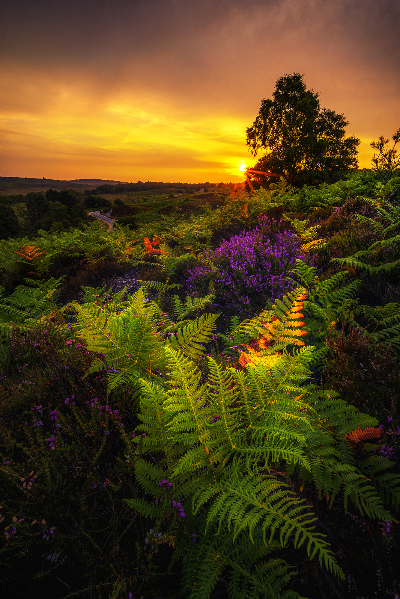 Fiery Sunrise New Forest