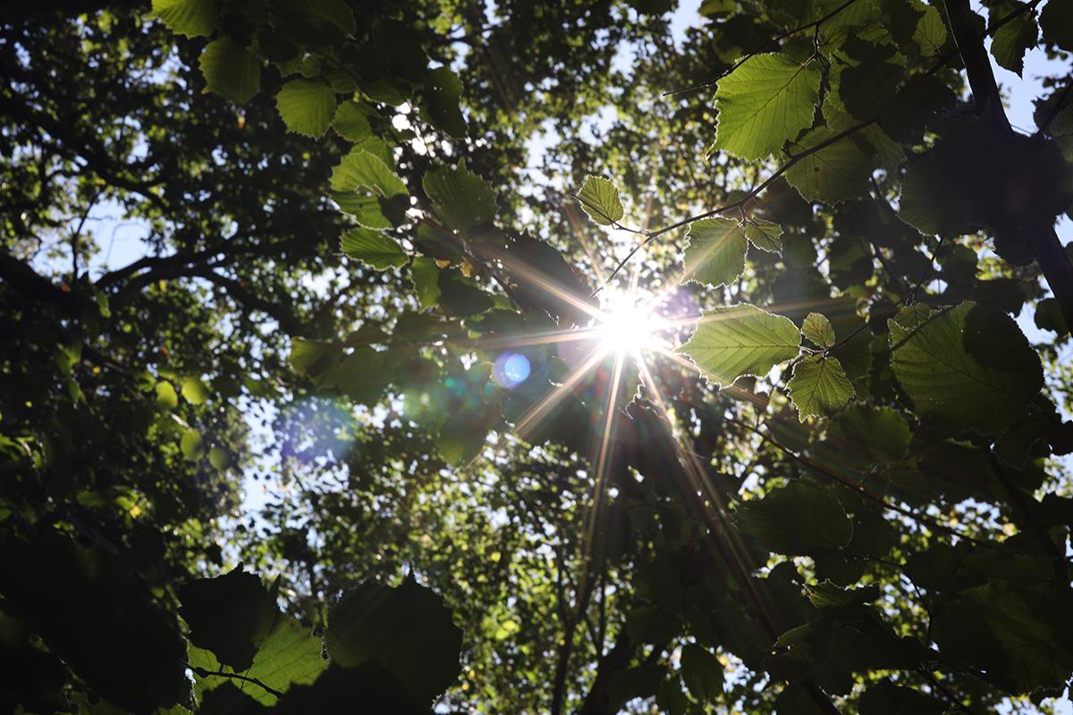 50mm f/1.2 sunstars at f/16