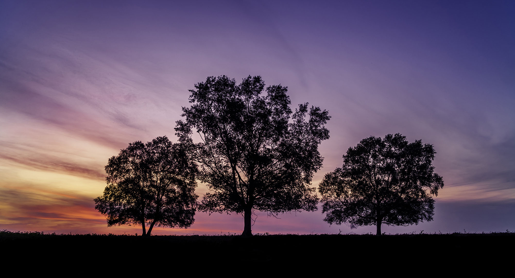 Three Tree Sunset.jpg