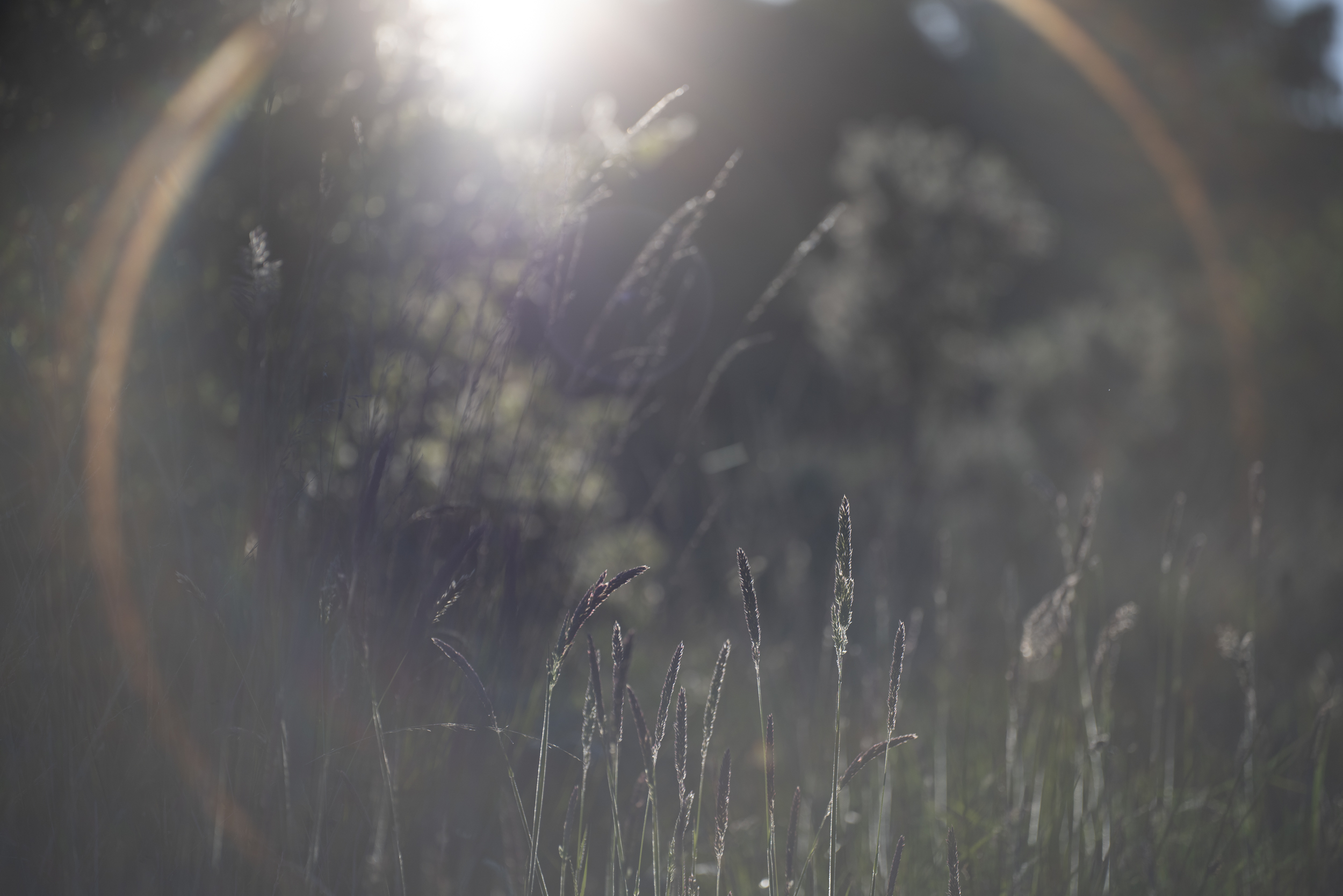 RAW image - strong flare and loss of contrast - wide open f/2.8