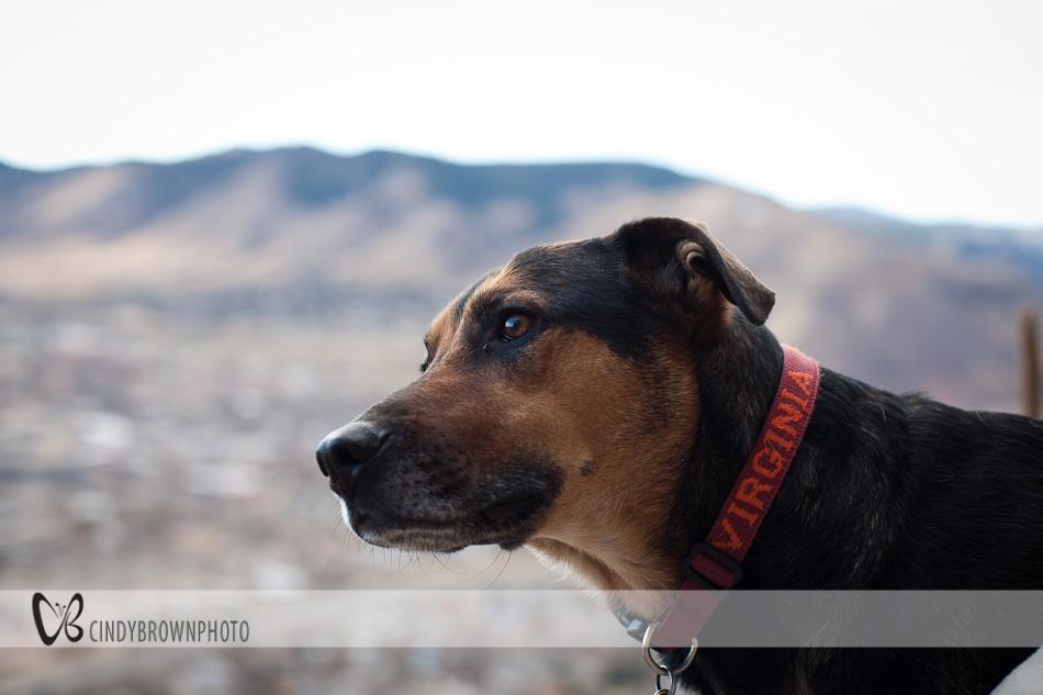 Ernie the climber dog