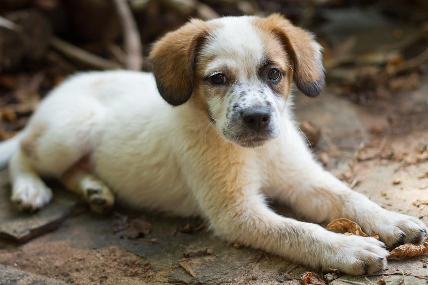 Mutt Puppy | Atlanta Pet Photographer
