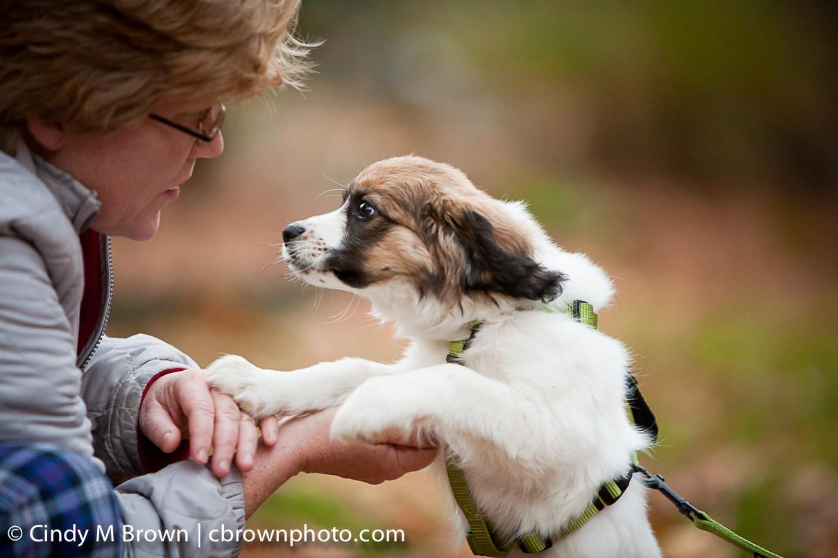 puppy_11_11-118