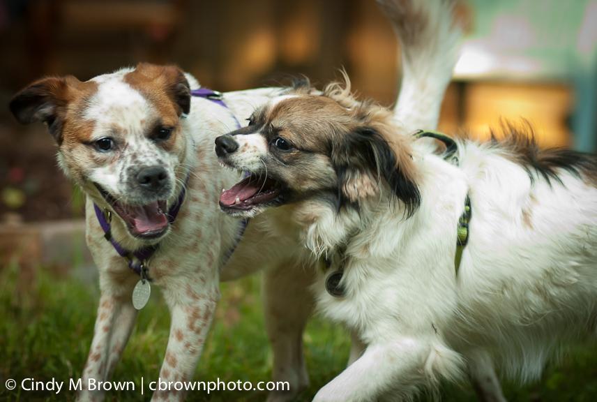 Pups Play