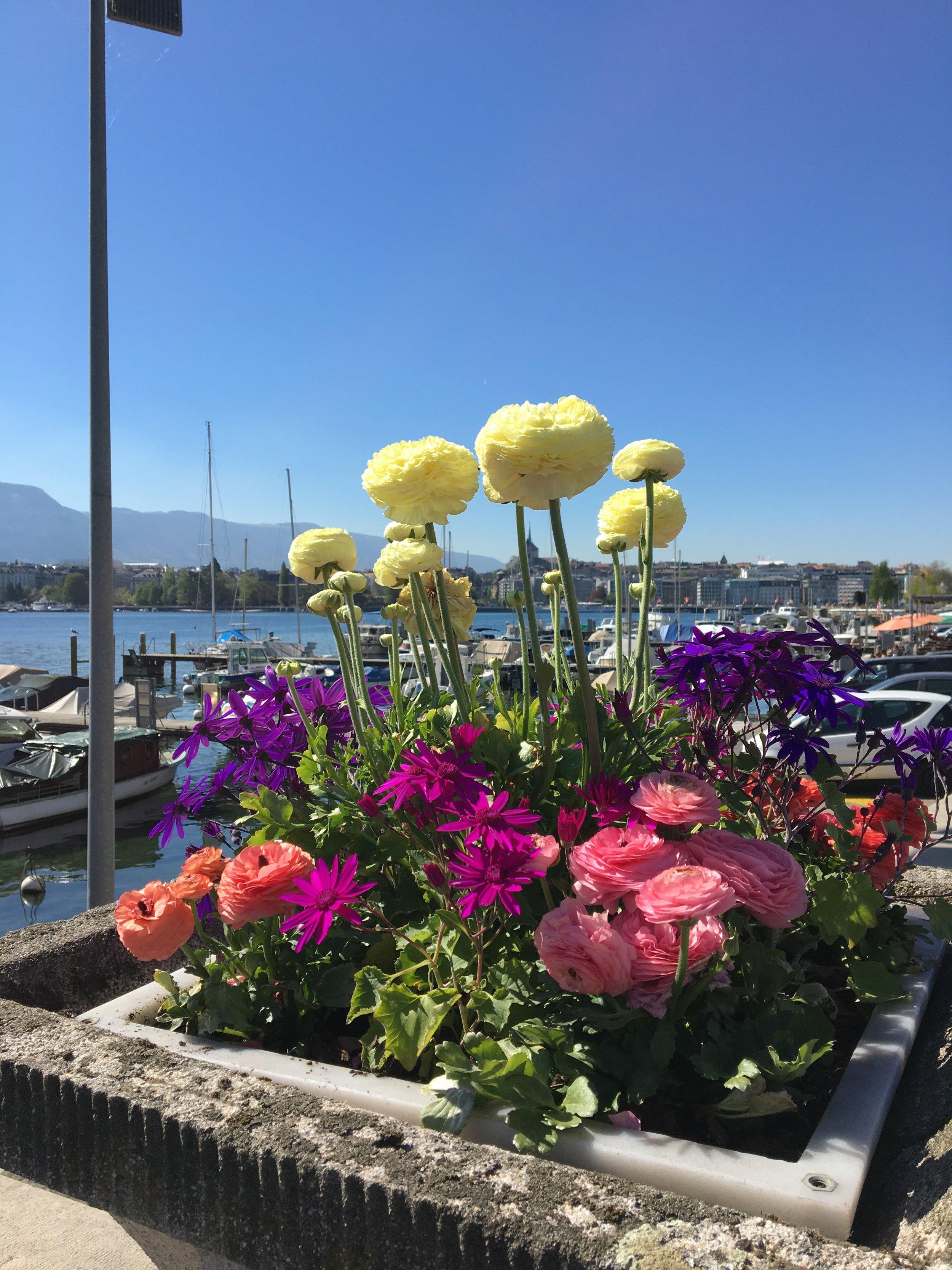 lake geneva flowers