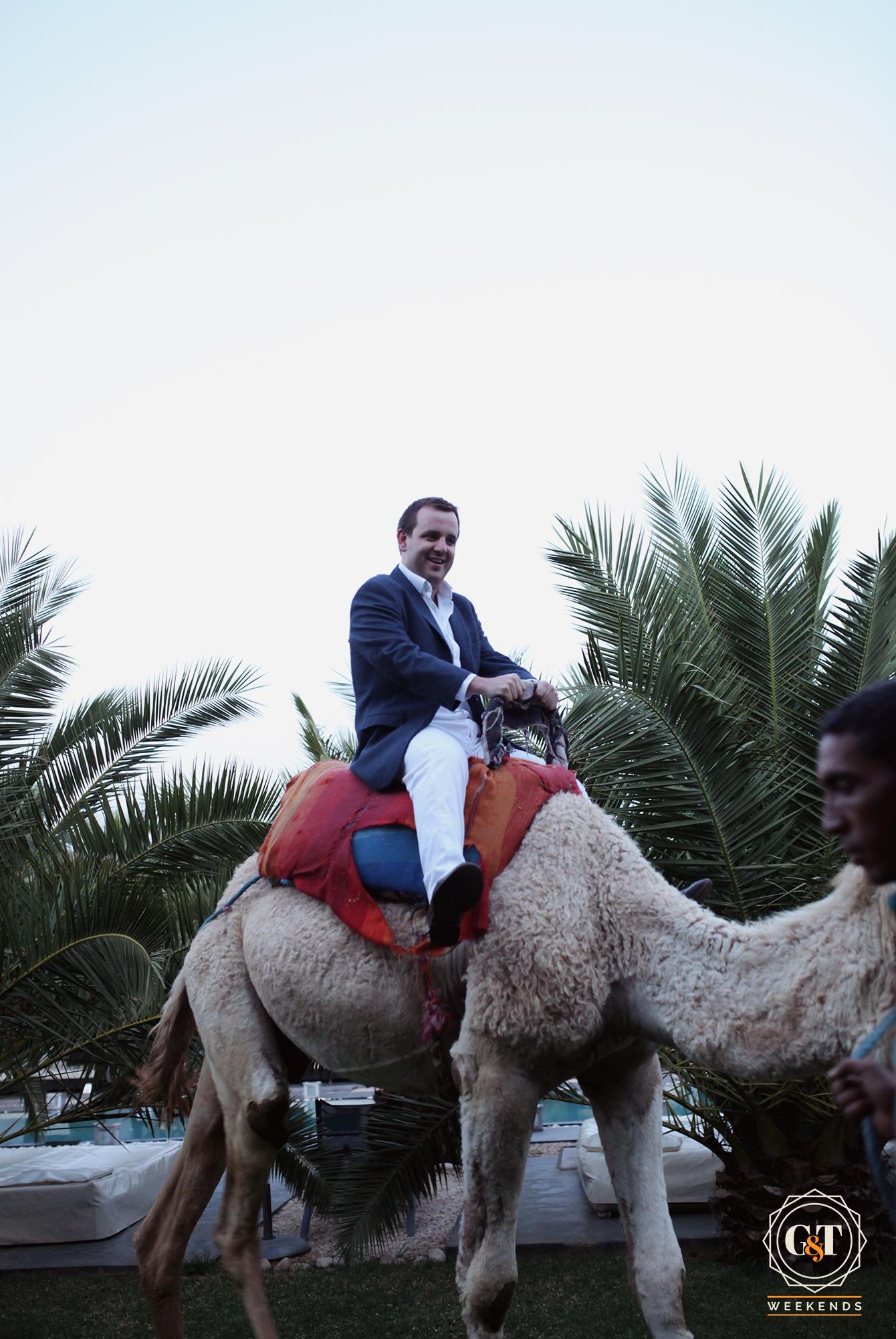 camel ride morocco reveller