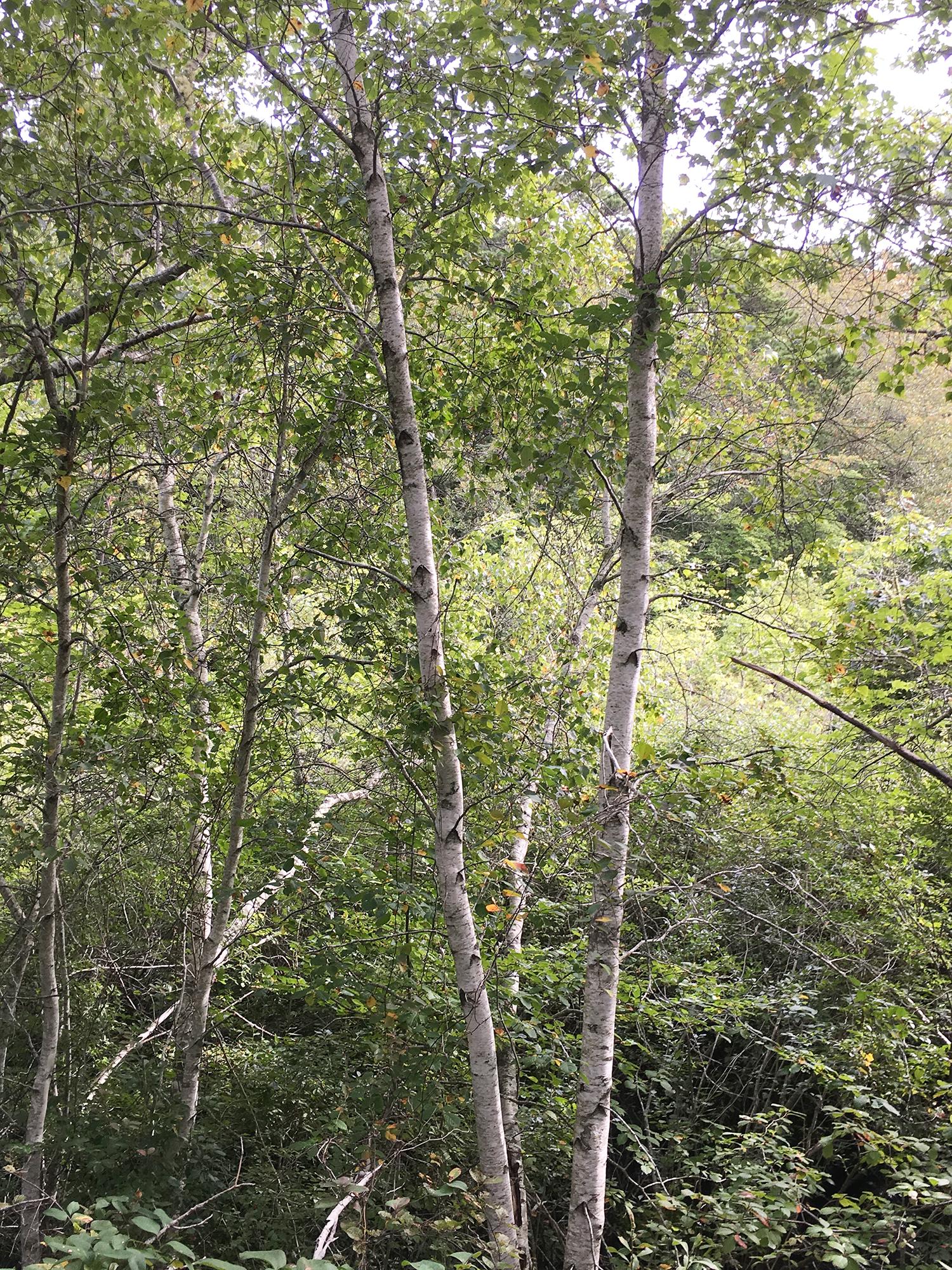 ConservationLand1_5.jpg