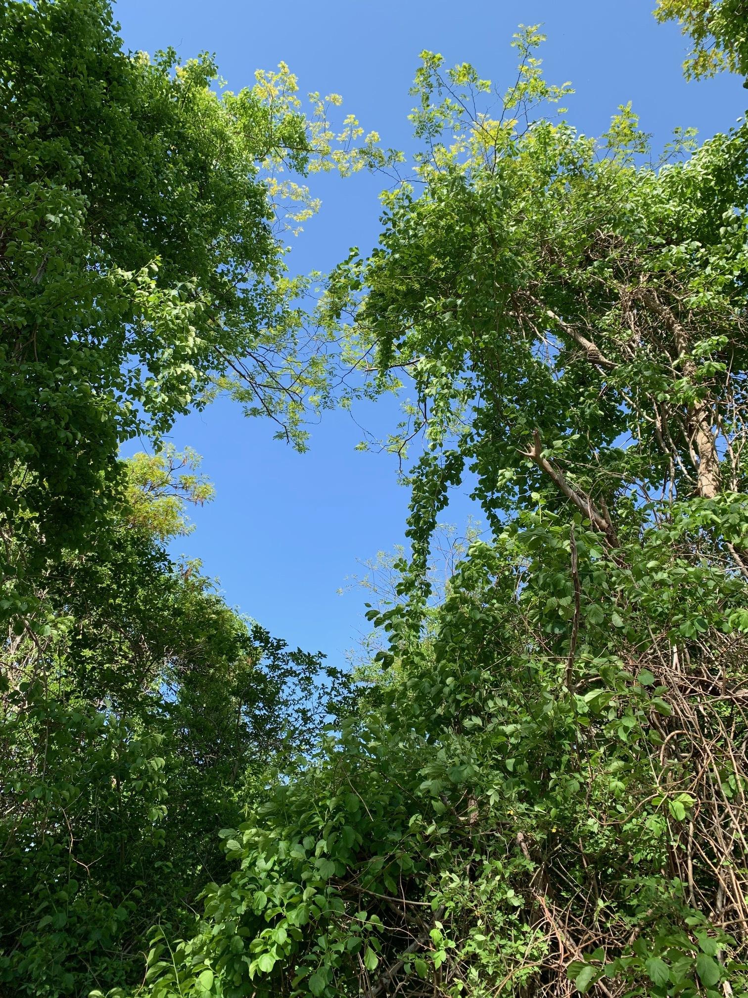 ConservationLand8_2_2.jpg