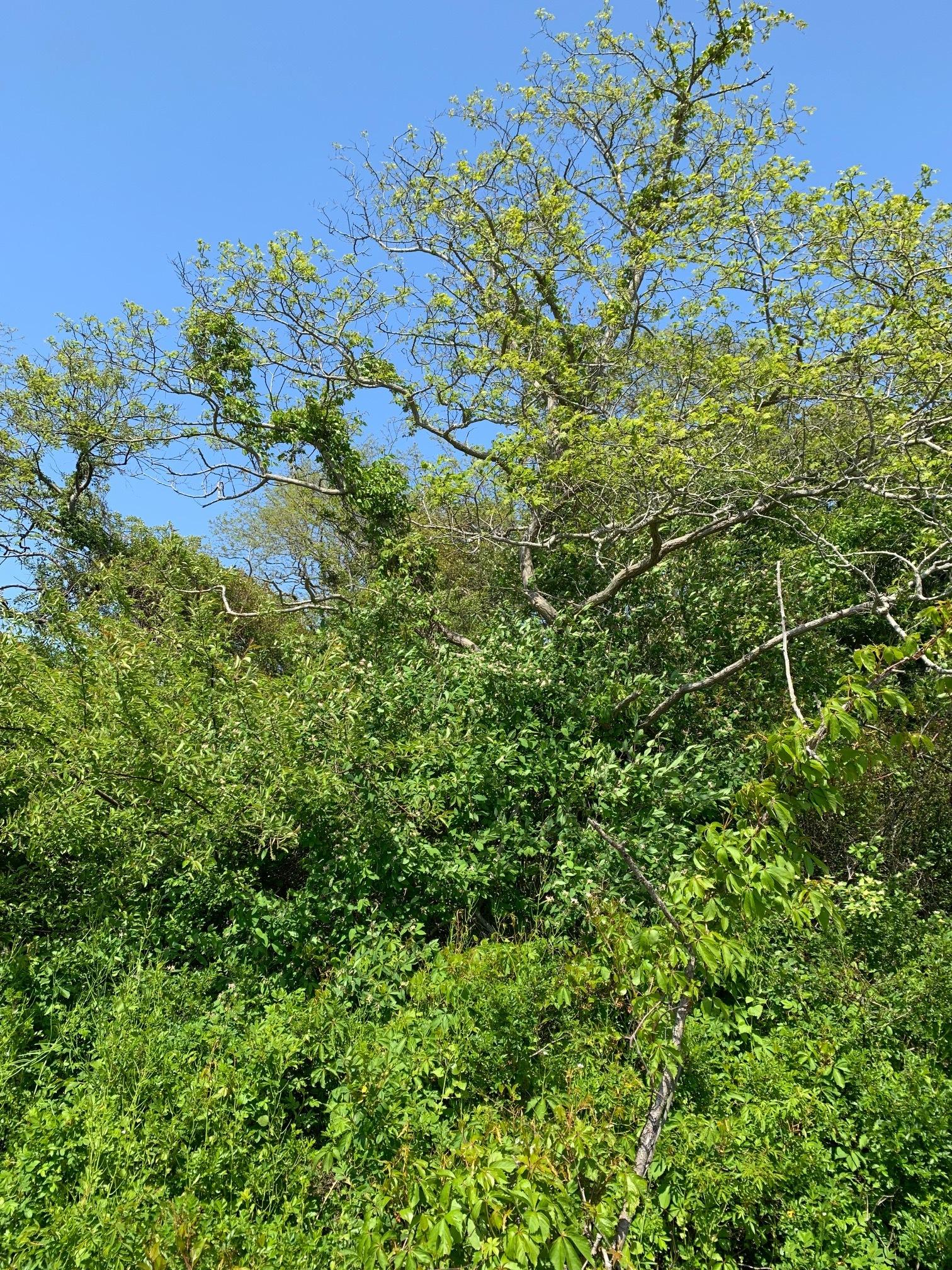 ConservationLand15_1.jpg