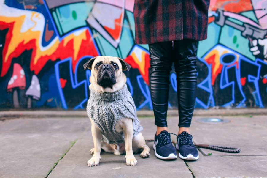 nottinghill-london-pug-puglife-pugswag-streetstyle-grafitti-portobelloroad-honeyidressedthepug-dogfashion-maxbone-coolpups-petfashion-style-trends-chic-petblog-fashionblog-Ari-dog-knit-jumper-nike-squishyface