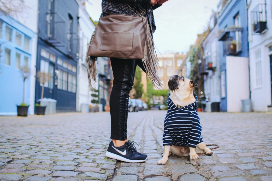 uk-london-nottinghill-stlukesmews-pug-puglife-dog-fashion-streetstyle-fringe-bag-nike-stripes-maxbone-puppy-hound-chic-colours-mews-swag-pugswag-arithepug-MM-honeyidressedthepug