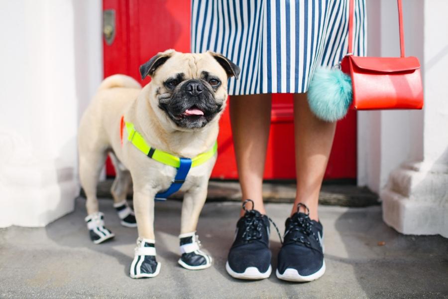 honeyifdressedthepug-uk-london-nottinghill-red-pug-puglife-pugswag-dog-pet-doggyshoes-stripes-midi-skirt-zara-pompom-squishyface-arithepug-puppy-coolpups-trendy-chic-sneakers-nike-door-colours-fashion-streetstyle