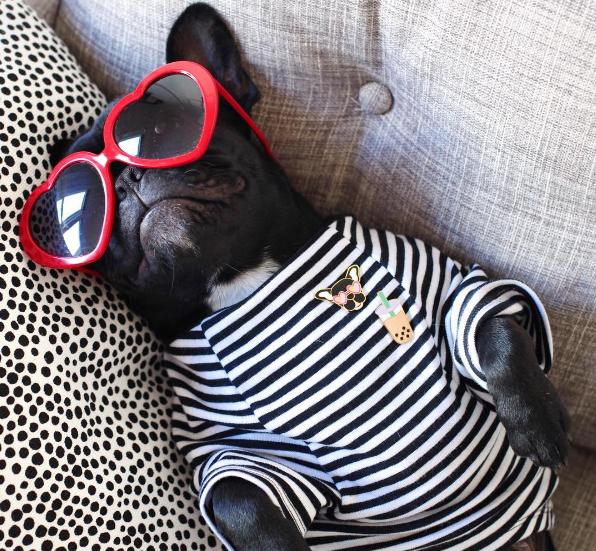 honeyidressedthepug-stripedtee-stripe-tee-sun-summer-spring-designandhappiness-sunglasses-blogpost-fashion-petfashion-stylishdogs-pooch-coolpups