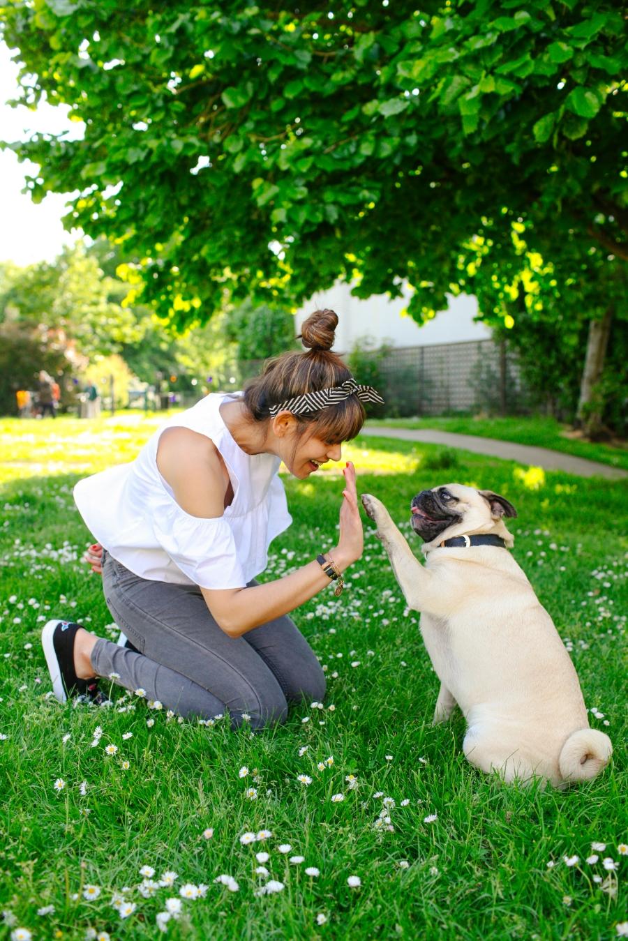 dogfashionblog-petfashionblog-london-honeyidressedthepug-ariandmm-pugfashion-humanandhoundstyle-dog-pug-pugswag-puglife-friendshipcollar-fashionablefriendships-london-coolpup-petfashion-vegancollar-twinning-summer-daisies-squishyface-streetstyle-petfashionblog-petblogger-londonblogger