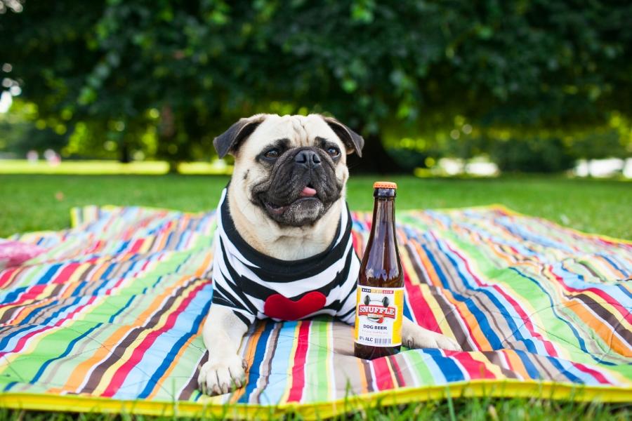 dogblog-petblog-petfashionblog-london-hydepark-humanandhound-style-pooch-stylishpup-picnicwithyourdog-picnicinthepark-picnic-dogtreats-fashion-lifestyle-dogfashion-pugswag-puglife-pug-honeyidressedthepug-dogbeer-snuffles-artisanpetdeli-streetstyle-zara-asos-dogtreats-dogfashion-coolpups-bullove