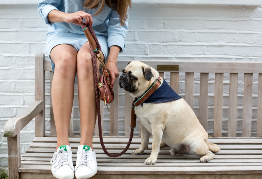 honeyidressedthepug-dogfashion-petfashion-cooldogs-london-petfashionblog-dogfashionblog-coolpups-poochette-rewardpouch-fashionfordapperdogs-dogfashionworld-bestindogfashion-humanandhound-dogblog-petblog-fashion&lifestyle-dogaccessories-walkies-DWAM-bohemianaccessoriesfordogs-bohemian-boho-bohoaccessories