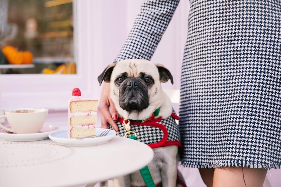 Dogfriendlycoffeeshopslondon-PeggyPorschen-humanandhound-dogfashionblog-petfashionblog-london-uk-fashionandlifestyleblog-londoncoffeeshops-bestdogbloglondon-pugswag-puglife-pug-londonpug-twinning-tweed-falltrend-pumpkin-fallfashion-Pink-winterstyle