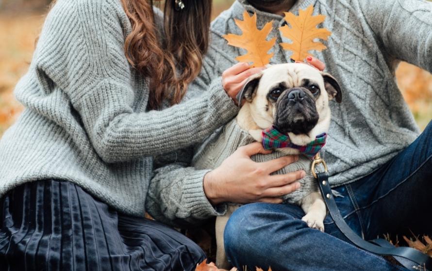 topdogblog-bestdogblog-dogblog-besttopdogbloglondon-topdogbloglondon-humanandhoundstyle-fashion-petfashion-dogfashion-coolpups-dogsinclothes-dogfashionblog-petfashionblog-ari&m-fall-fallleaves-autumn-fallwinterstyle-falltrends-family-thanksgiving-lovemyfam-familyshoot-portraitshoot-meandmypug-velvetskirt-pleatedskirt-falllooks-dapperdogs-dogsinbowtie-pugswag-pug-puglife-red-fallwinter2016