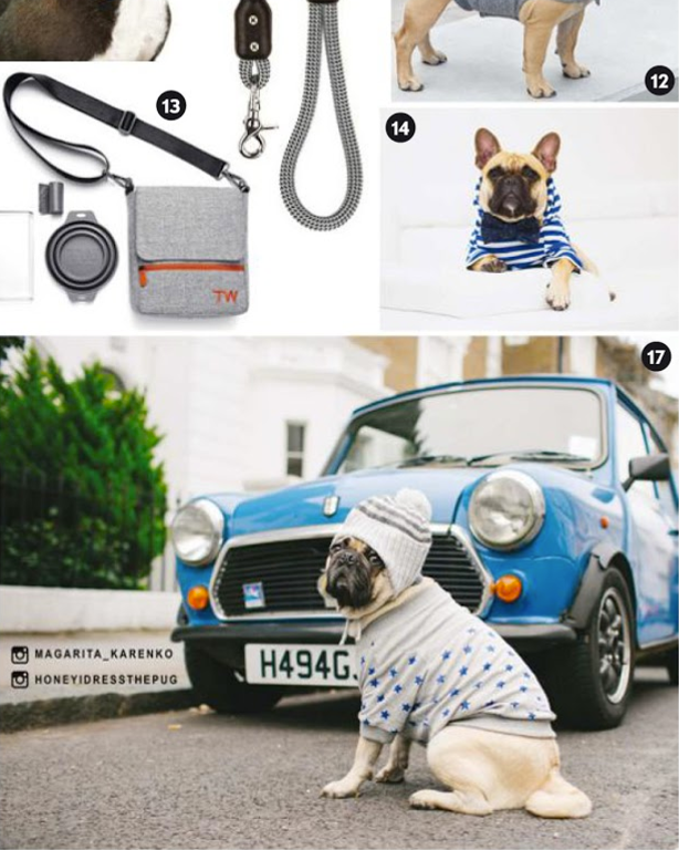 honeyidressedthepuginvogue-ariinvogue-bristishvogue-vogue-feb2017-dogmodel-bestdoginfluencerlondon-puginfluencer-london-doginfluencerlondon-dogifluencerinvogue-petmodel-bestdogmodellondon-dogmodeluk-vintagecar-electricblue-puginabeanie-madeittovogue