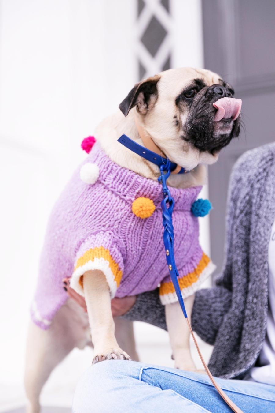 humanandhound-twinning-fashion-london-twinningiswinning-ariandm-spring-dogfashion-stylishdogs-bestdresseddog-pug-pugfashion-dogsinclothes-springjumper-best-dogfashionblog-dogblog-bestdogblog-topdogblog-humanandhoundblog-bestdogbloginlondonstreetstyle-londonstreetstyle-humanandhoundstreetstyle
