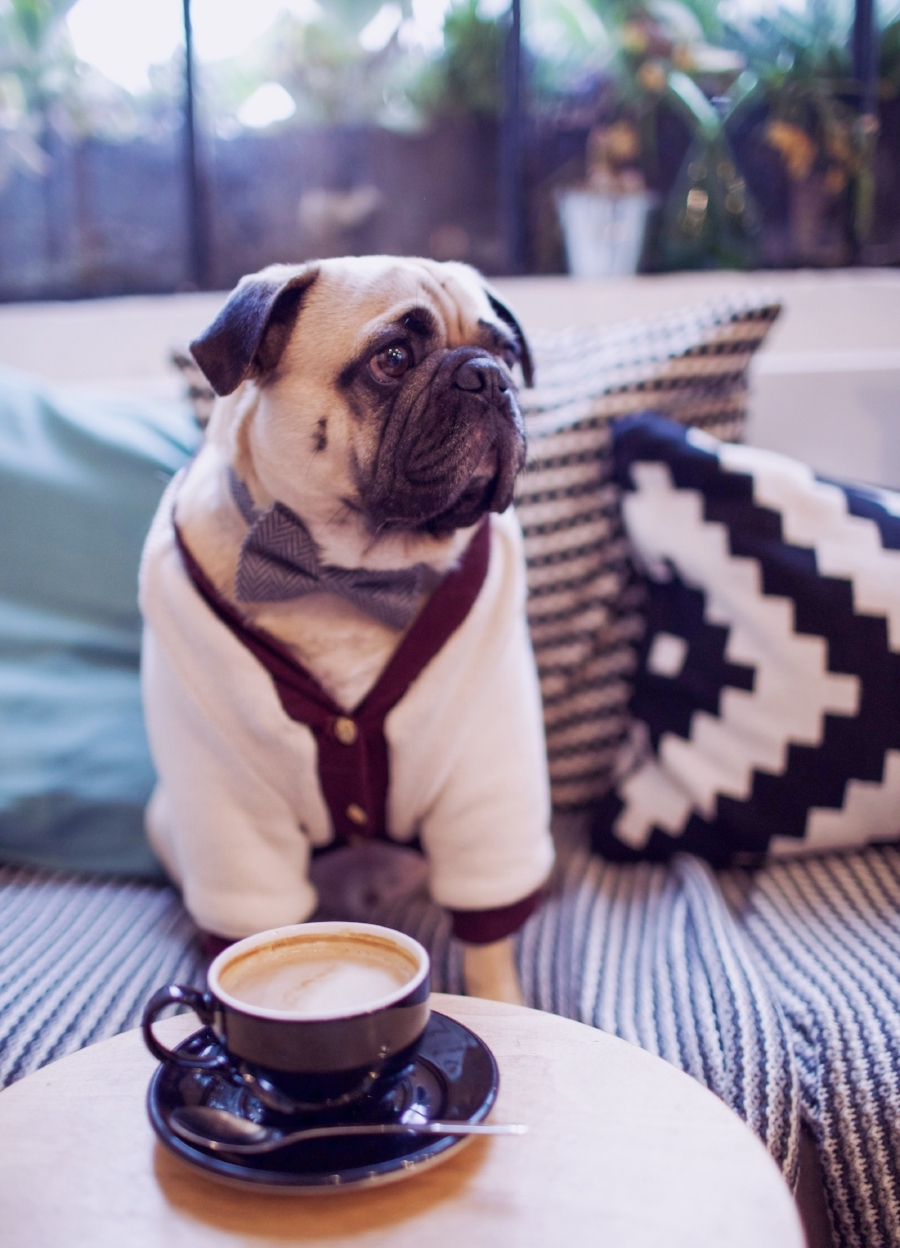 bestdogbloglondon-dogblog-dogfashionblog-bestdogfashionblog-petfashion-pugswag-dogfriendly-coffeeshops-londoncoffeeshops-hejcoffee-lifestyle-cozycoffeeshop-humanandhound-thingstodowithyourdoginlondon-dogfriendlycoffeeshoplondon-petstyleblog