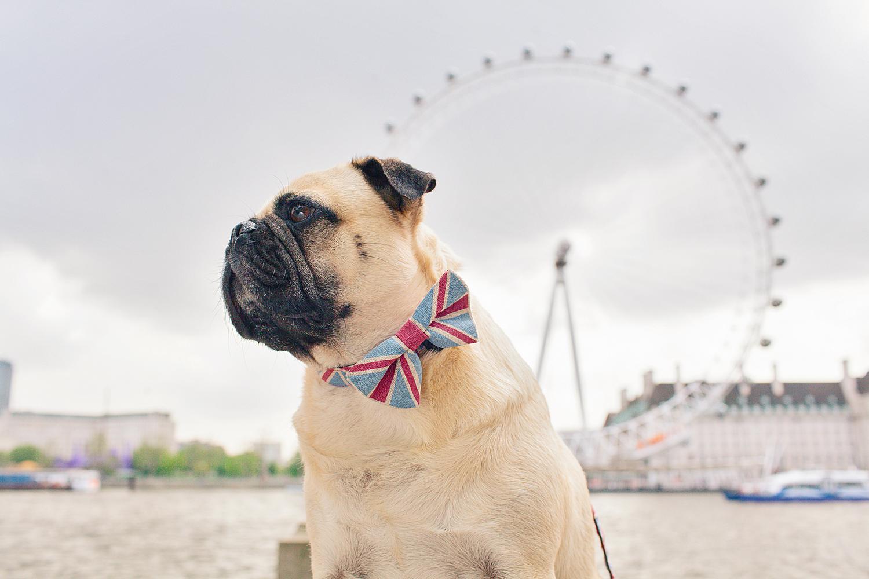 london-londoneye-unionjack-honeyidressedthepug-dogfashionblog-petfashionblog-dogblog-london-uk-dogsinclothes-humanandhound-humanandhoundfashion-puglife-londonpug-bestdogblog-topdogblog-stylishdogs-instafamousdogs.jpg