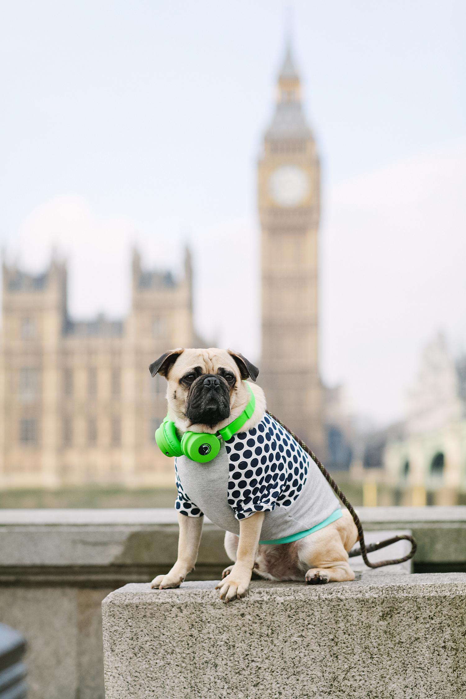 london-westminster-wesminsterabbey-honeyidressedthepug-dogfashionblog-petfashionblog-dogblog-london-uk-dogsinclothes-humanandhound-humanandhoundfashion-puglife-londonpug-bestdogblog-topdogblog-stylishdogs-instafamousdogs.jpg