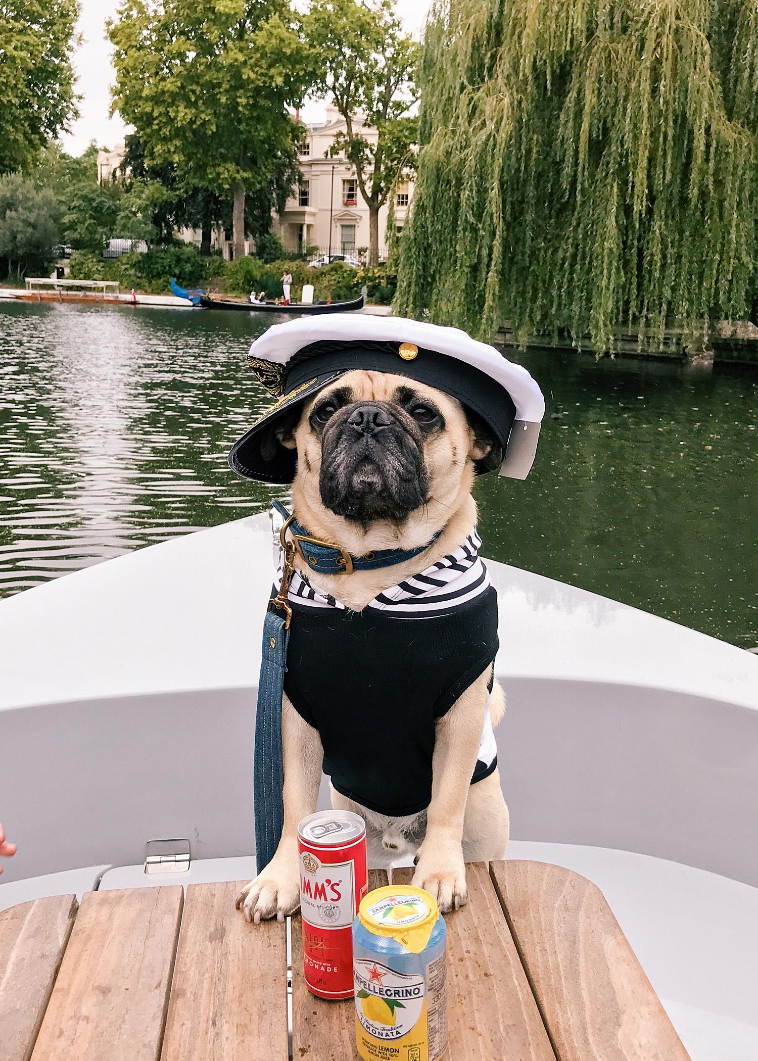 honeyidressedthepug-dogblog-dogfriendlyblog-thingstodowithyourdog-boatingwithdog-dogfashionblog-petfashionblog-goboatlondon-petblogger-humanandhound-fashionandlifestyle-londonpetblogger-topdogblog-puglife-pugonaboat-boatingwithdog-londoncanals7.jpg