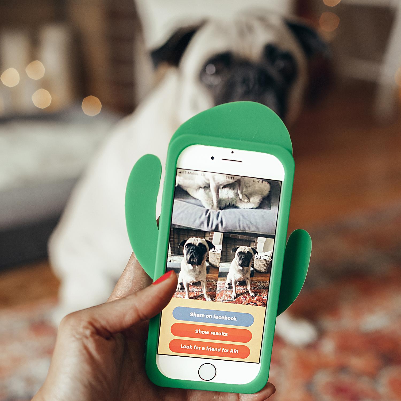 whosmymutter-dogapp-breedrecognitionapp-dogbreedfinder-honeyidressedthepug-influencer-collab-doginfluencer-paidcollab-puglige-dogblog-dogmomblog-dogmom 3.jpg