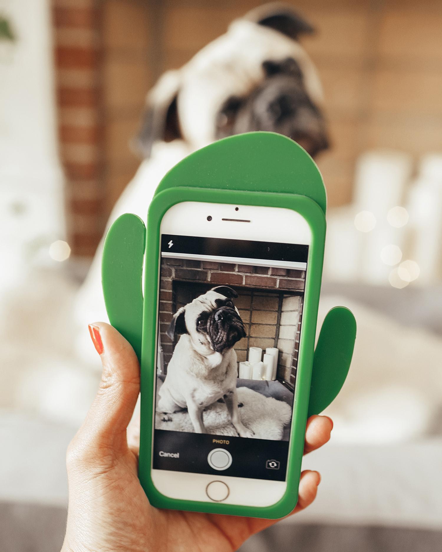 whosmymutter-dogapp-breedrecognitionapp-dogbreedfinder-honeyidressedthepug-influencer-collab-doginfluencer-paidcollab-puglige-dogblog-dogmomblog-dogmom 5.jpg