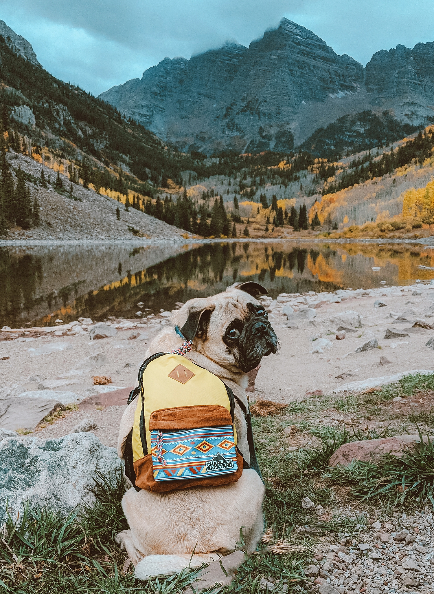 Honey I Dressed The Pugfall Magic In Colorado